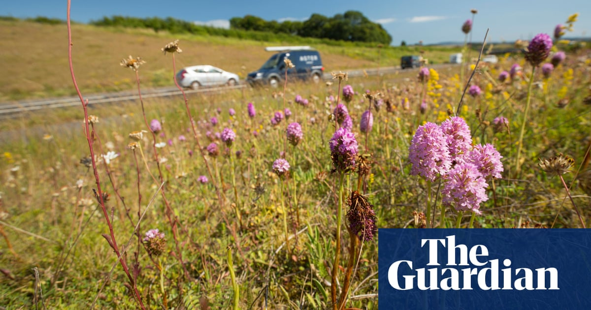 On the verge: a quiet roadside revolution is boosting wildflowers